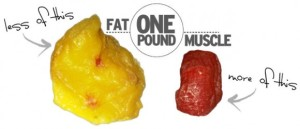 muscle vs fat one pound weight loss